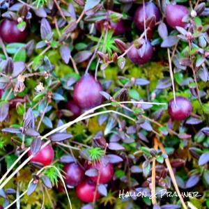 Tranbärsmossen